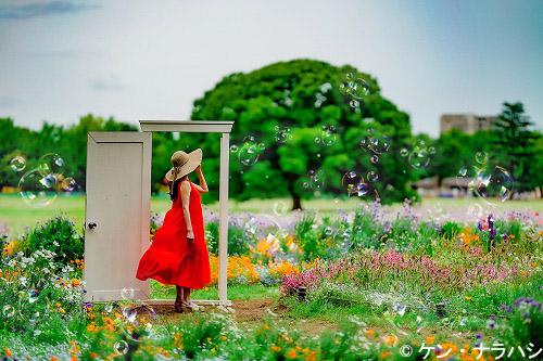 国営昭和記念公園|一般財団法人 公園財団